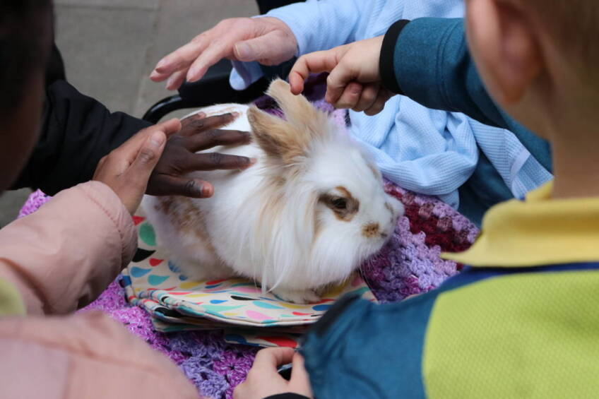 Intergenerational project brings farm animals to Charing Cross